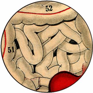 Natlacen (Nº06)