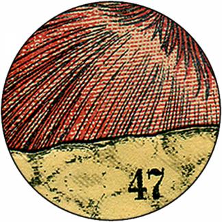 Natlacen (Nº11)