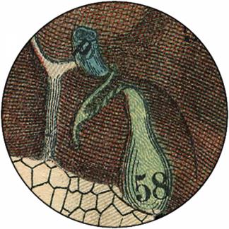 Natlacen (Nº12)