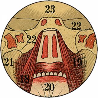 Natlacen (Nº03)