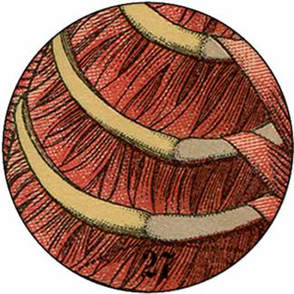 Natlacen (Nº07)