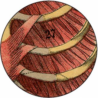 Natlacen (Nº08)
