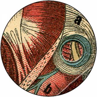 Natlacen (Nº09)